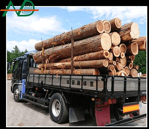 安藤林業とは